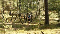 Calendrier trail Pays-Bas - Trail en Juin 2019 : De Hoge Veluwe GPX Run à  Otterlo