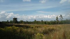 Calendrier trail Belgique   Trail en Mai 2021 > Trail de la Baraque Fraiture (Baraque Fraiture)