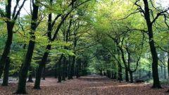 Trail calendar the Netherlands   Trailrunning race in May 2020 > Groot Boeschoten Trail (Voorthuizen)