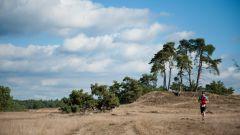 Trail calendar the Netherlands   Trailrunning race in August 2020 > Veluwse TrailRun (Ermelo)