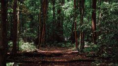 Calendrier trail Belgique   Trail en Août 2019 > Climate Trail (Herbeumont)