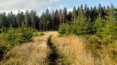 Calendrier trail Belgique   Trail en Juillet 2020 > GTLC - Grand Trail des Lacs et Chateaux (Ovifat (Waimes))