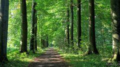 """Calendrier trail Belgique   Trail en Septembre 2019 > Trail caritatif """"Tous pour Lucas"""" (Mignault)"""