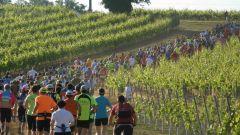 """Trail kalender Frankrijk Nouvelle-Aquitaine  Trailrun in Mei 2021 > La Mosnacotoise """"Trail du Vignoble Cognaçais"""" (Mosnac)"""
