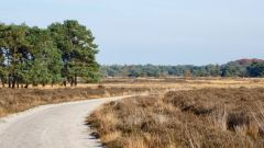 Trail calendar the Netherlands   Trailrunning race in March 2021 > Ooievaarstrail (Goirle)