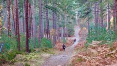Calendrier trail France   Trail en Novembre 2020 > La Petite Origole (Perray-en-Yvelines)