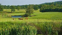 Calendrier trail France Nouvelle-Aquitaine Haute-Vienne Trail en Octobre 2021 > Trail du PNR Périgord-Limousin (Bussière-Galant)