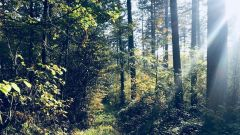Calendrier trail Belgique   Trail en Mai 2021 > Trail des Pompiers de Beauraing (Winenne)