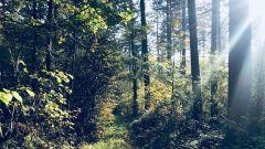 Trail calendar Belgium   Trailrunning race in April 2020 > Trail des Pompiers de Beauraing (Winnene)