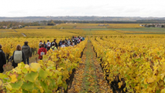 Trail calendar France Nouvelle-Aquitaine Gironde Trailrunning race in November 2020 > La Raisin d'Or en Sauternais (Sauternes)