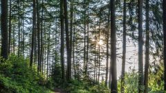 Calendrier trail Belgique   Trail en Octobre 2016 > Rock and Run (Malmedy)