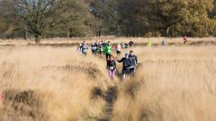 Trail calendar the Netherlands   Trailrunning race in November 2019 > RunForestRun Holtingerveld (Havelte)