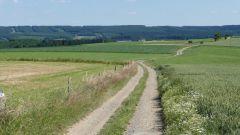Calendrier trail Belgique   Trail en Novembre 2019 > Trail de Tenneville (Tenneville)