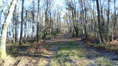 Calendrier trail Belgique - Trail en Avril 2019 : ECORGA TRAIL à 6940 Wéris