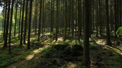Trail kalender België   Trailrun in Augustus 2020 > Trail des croix (Stavelot)