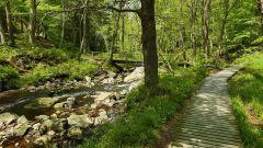 Calendrier trail Belgique   Trail en Novembre 2019 > Trail des Morses de la Hoegne (Sart-Lez-Spa)