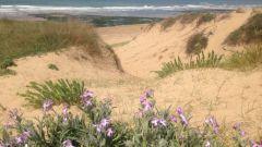 Calendrier trail France Pays de la Loire Vendée Trail en Octobre 2020 > Trail Vert'Olonne (Les Sables-d'Olonne)
