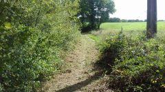 Calendrier trail Belgique   Trail en Septembre 2016 > Transylvestrail (Sivry-Rance)