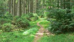 Calendrier trail Belgique   Trail en Octobre 2019 > Verdi trail mangombroux stembert (Stembert)