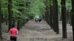 Calendrier trail Pays-Bas - Trail en Mai 2019 : Trailrun Wezep à 8091 Wezep