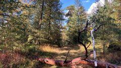 Trail kalender Nederland   Trailrun in Mei 2021 > Zandenbos Trail (Nunspeet)