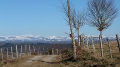 Trail kalender Frankrijk Auvergne-Rhône-Alpes Cantal Trailrun in Maart 2021 > Trail de Laroquapattes (Laroquebrou)