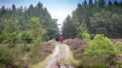 Calendrier trail Belgique - Trail en Mai 2019 : Kattenbos Trail Lommel à 3920 Lommel