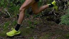 Calendrier trail Belgique   Trail en Août 2020 > Original Forestrun @Bosland (Hechtel-Eksel)
