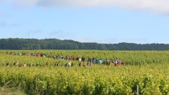 Trail kalender Frankrijk Grand Est Marne Trailrun in Juni 2021 > Trail de Bouzy (Bouzy)