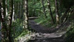 Calendrier trail France   Trail en Juin 2021 > FRANCHEVILL'TRAIL (FRANCHEVILLE)