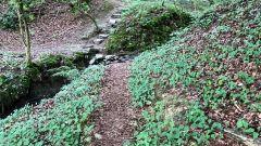 Calendrier trail Belgique   Trail en Août 2020 > Mwertî Trail (Mortier)