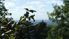 Trail kalender Frankrijk Occitanie Tarn Trailrun in September 2020 > Trail du Rampaillou (Verdalle)