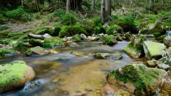 Calendrier trail France Nouvelle-Aquitaine Charente Trail en Mai 2020 > Grand Trail de la Folle Blanche (Cherves-Richemont)