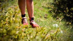 Calendrier trail France Occitanie Lozère Trail en Juin 2021 > Trail de la Tieule (La Tieule)