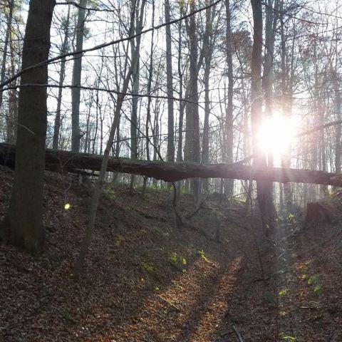 Trail des Hivernales du RCB  2021