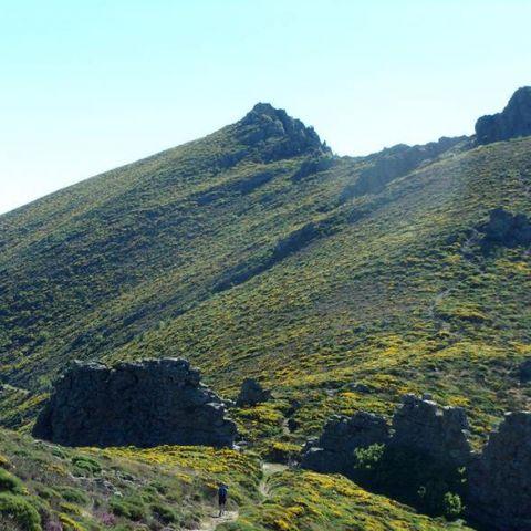 Trail des Banuts  2019