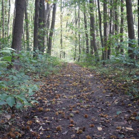 Kravaal Trail  2020