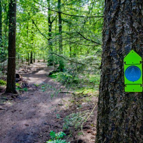 Veluwe Groot Boeschoten Trail & Walk  2018