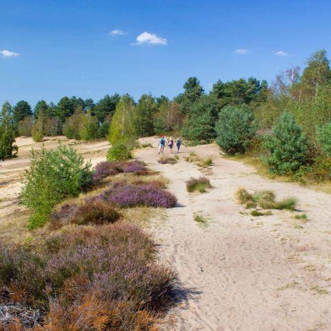 Devil's Trail Maasduinen  2020