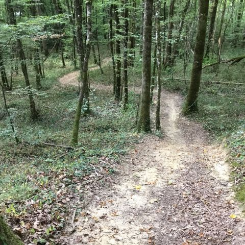 Trail des Petits Bois  2020