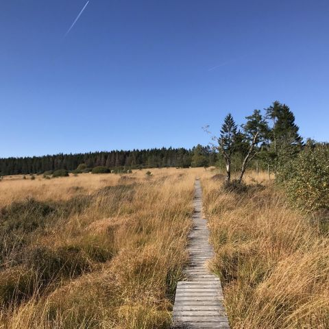 UTDS - Ultra-Trail® des Sources  2021
