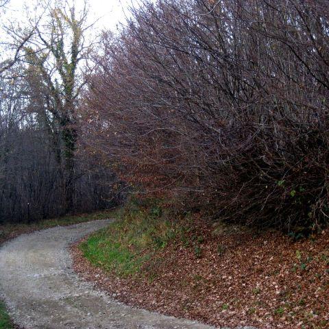 Trail hivernal de la vallée de la thure   2020