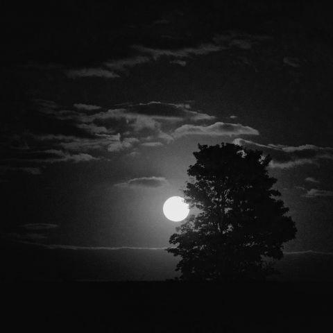 Trail nocturne la Lasnoise  2017