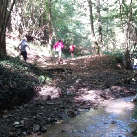 Trail La Mesniloise  2019