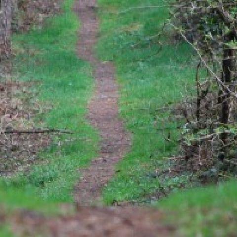 Trail des Hérissons  2017
