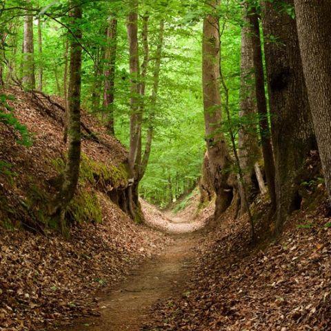 Trail de Chaumont-Gistoux  2017