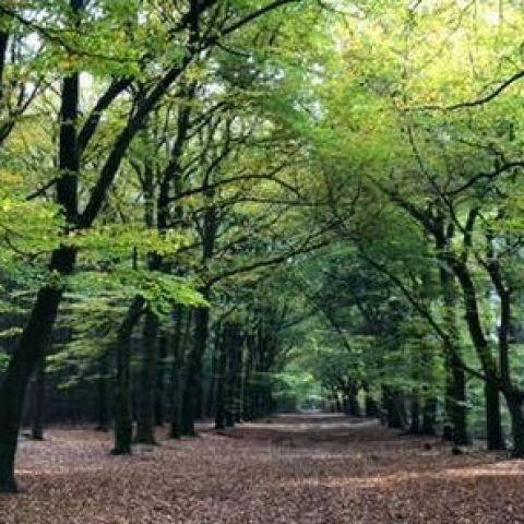 Groot Boeschoten Trail