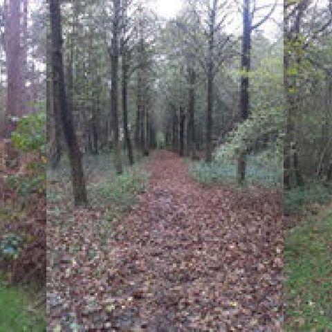 Trail Provinciaal Domein Het Leen  2020