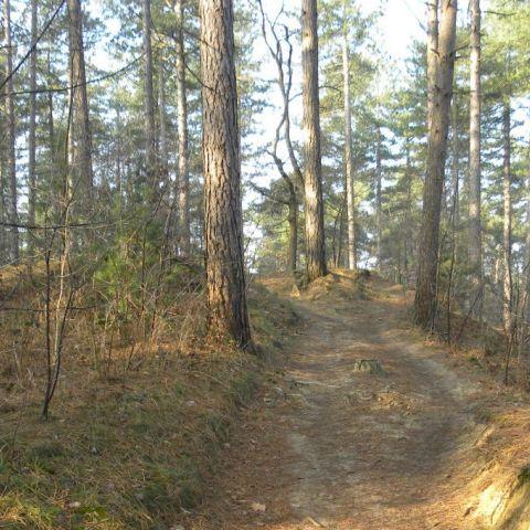 HETRIC Trail  2017
