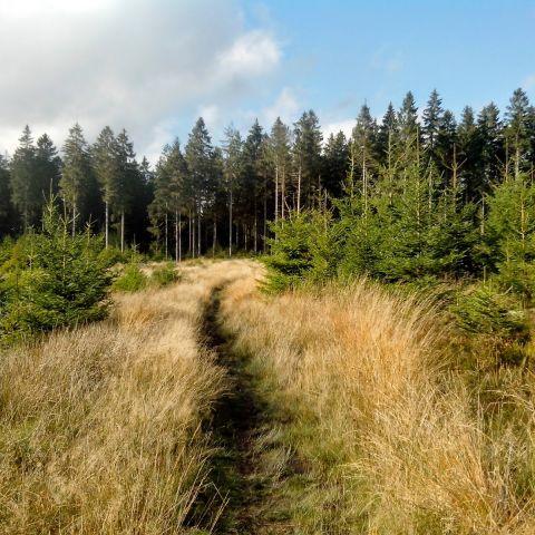 GTLC - Grand Trail des Lacs et Chateaux  2014